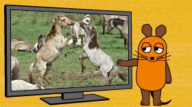 Die Maus präsentiert einen Ausschnitt aus der aktuellen Sendung; Rechte: WDR