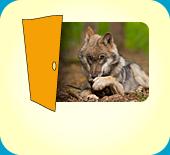 Wolf-Tierpark / 27313Dörverden