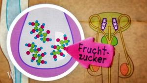 Mein Körper: Sperma - Fruchtzucker; Rechte: WDR 2012