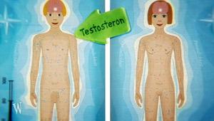 Die ergebnisreiche Erhöhung der Brust von der Massage